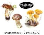 birch bolete and yellow... | Shutterstock . vector #719185672