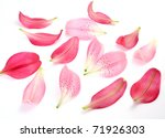 Stock photo petals of pink lilies 71926303