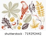 vintage set of hand drawn... | Shutterstock .eps vector #719292442