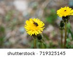 flowers and insects in the... | Shutterstock . vector #719325145