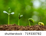 close up of spring bud growing... | Shutterstock . vector #719330782