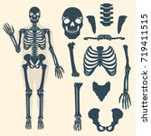 human skeleton with different... | Shutterstock .eps vector #719411515