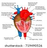 heart of body in terms of...   Shutterstock . vector #719490526