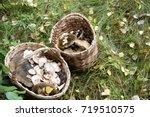 basket with mushrooms. autumn... | Shutterstock . vector #719510575