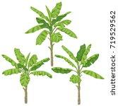 banana plants isolated on white ... | Shutterstock .eps vector #719529562