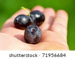 Black olives on hand . - stock photo