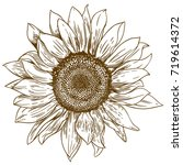 vector antique engraving... | Shutterstock .eps vector #719614372