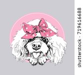 cute poodle in a pink bow... | Shutterstock .eps vector #719616688