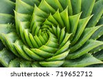 Spiral Aloe Vera With Water...