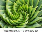 spiral aloe vera with water...   Shutterstock . vector #719652712