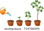 stages of growth of a tree from ... | Shutterstock .eps vector #719700595