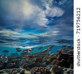 Small photo of Fish shoal underwater in tropical ocean water. Split shot of maldivian scenery with clouds on background.