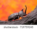 beetles   insect   japanese...   Shutterstock . vector #719759245