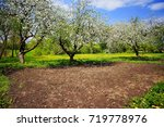 apple trees blooming in the... | Shutterstock . vector #719778976