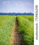 green plants in the field | Shutterstock . vector #719856298