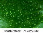 water drop leaves | Shutterstock . vector #719892832