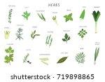herbs spices green... | Shutterstock . vector #719898865