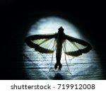moth in backlight | Shutterstock . vector #719912008