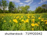 flowering dandelions on a... | Shutterstock . vector #719920342