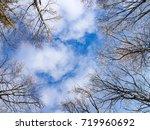 bottom view of trees in winter...   Shutterstock . vector #719960692