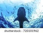 whale shark underwater | Shutterstock . vector #720101962