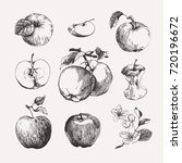 ink drawn collection of apples | Shutterstock .eps vector #720196672