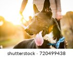 Stock photo a happy dog being walked by his owner at a local park at sunset while wearing a blue bandana 720499438