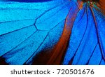 Stock photo wings of the butterfly ulysses closeup wings of a butterfly texture background 720501676