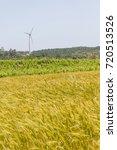Small photo of Wheat and grape plantation and eolic farm, Aljezur, Algarve, Portugal