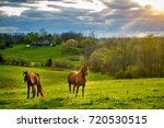 Beautiful chestnut horses on a farm in Central Kentucky at sunset - stock photo