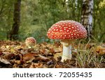 Red Mushroom   Toadstool In Th...