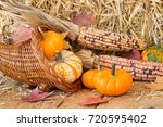 Colorful Pumpkins  Gourds And...