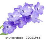 blue orchid isolated on white | Shutterstock . vector #72061966