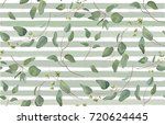 eucalyptus different tree ... | Shutterstock .eps vector #720624445