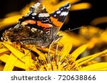 Red Admiral Butterfly Closeup...