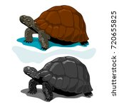 Stock vector illustration of vector tortoises 720655825