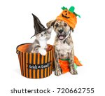 funny puppy and kitten in... | Shutterstock . vector #720662755