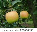 green fresh apple on tree  | Shutterstock . vector #720680656