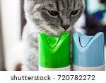 cat is sniffing cylinder of air