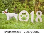 adorable fox terrier in a party ... | Shutterstock . vector #720792082