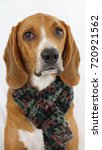 dog with scarf  coonhound | Shutterstock . vector #720921562