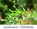 fresh nature abstract... | Shutterstock . vector #720936436