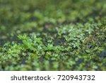 macro closeup on small green... | Shutterstock . vector #720943732