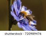 macro photo of bee is roasting... | Shutterstock . vector #720989476