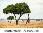 giraffe in masai mara safari... | Shutterstock . vector #721022248