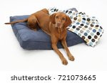 Stock photo magyar vizsla looking in the camera on dog bed 721073665