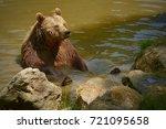 The Brown Bear  Ursus Arctos ...