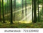 forest landscape | Shutterstock . vector #721120402