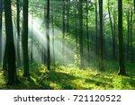 forest landscape | Shutterstock . vector #721120522