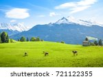Idyllic Alpine Scenery  Cows...